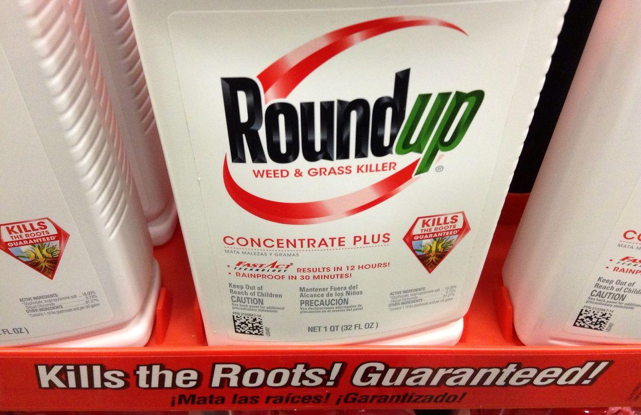 Afbeelding van Geen verbod op 'kankerverwekkende' onkruidverdelger Monsanto