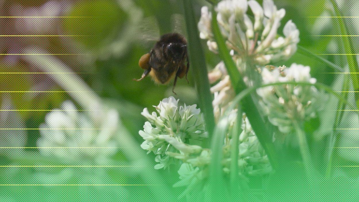 Afbeelding van Wetenschappelijke artikelen over afname biodiversiteit als gevolg van intensieve landbouw