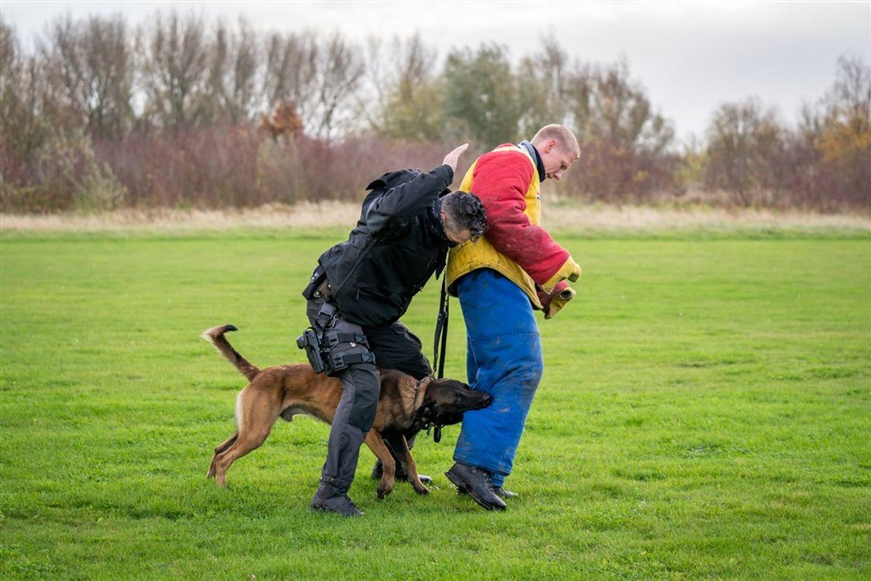 Afbeelding van Kamerleden vragen ministers opheldering over mishandelingen politiehonden