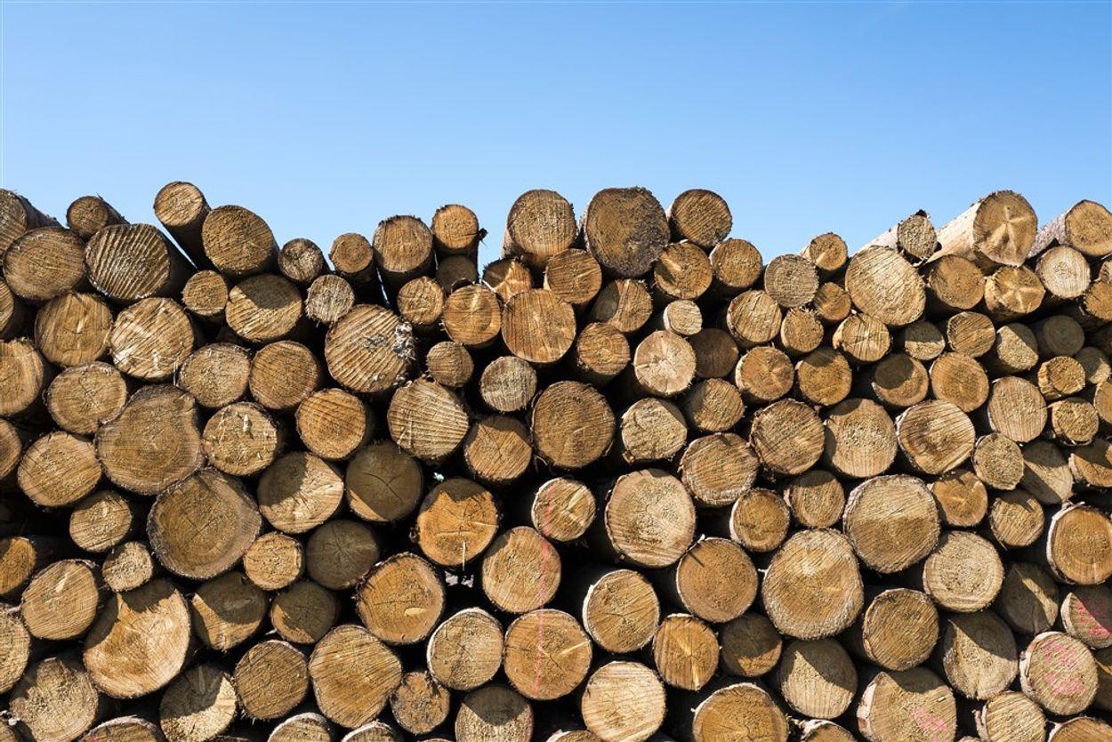 Afbeelding van Voorlopig geen nieuwe subsidies voor biomassacentrales