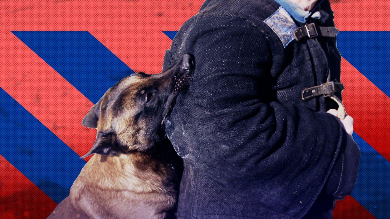 Afbeelding van 'Tuchtrechter moet onderzoek doen als politie onrechtmatig geweld toepast'