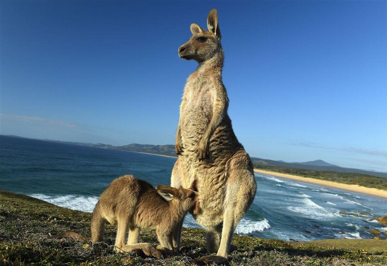kangoeoroe met kind bij water