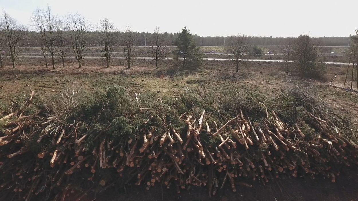 bos als brandstof biomassa