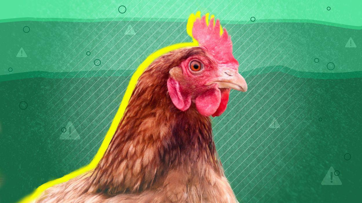 Afbeelding van De uitgeputte bodem 1: Het kippenexperiment