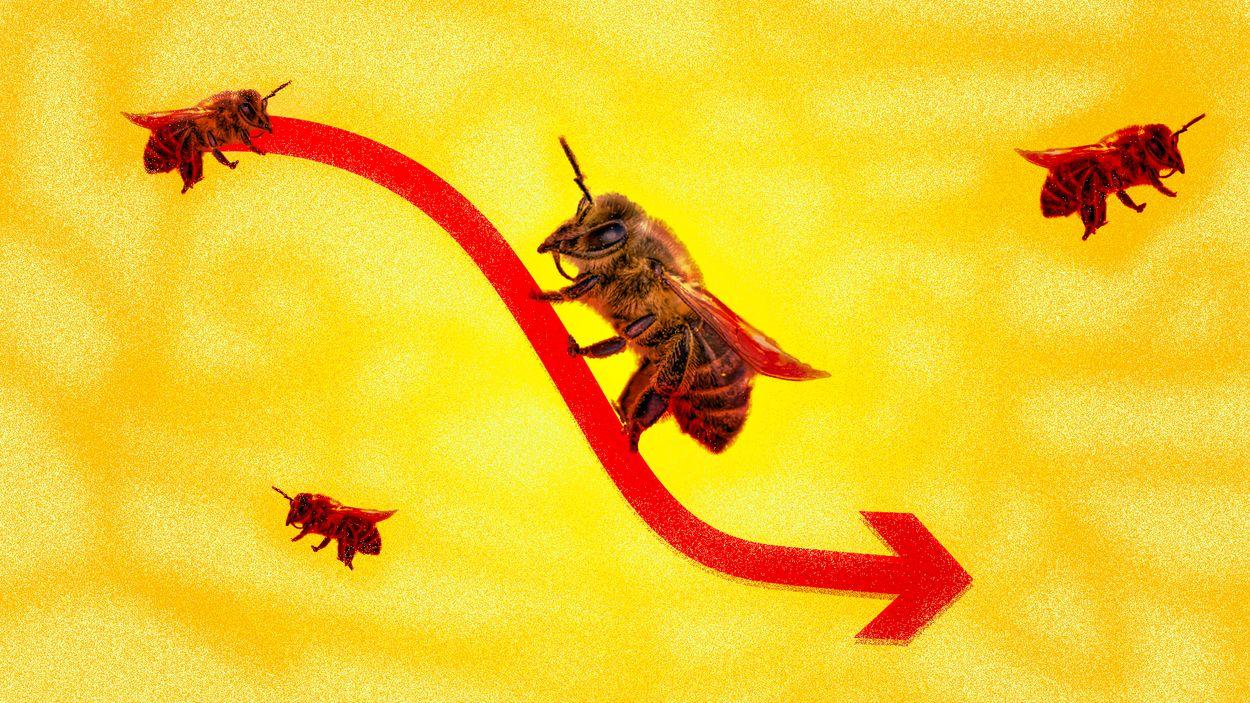 Afbeelding van Wereldwijd kwart minder insecten, in Nederland afname ernstiger