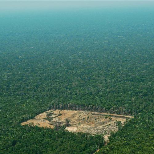 Afbeelding van Illegale kap in tropisch regenwoud toegenomen tijdens coronacrisis
