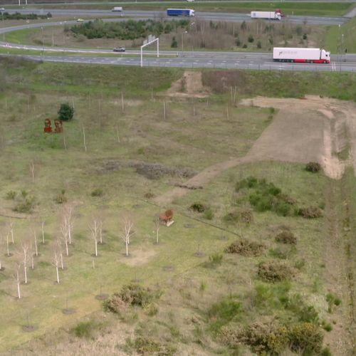 Afbeelding van D66 Limburg: 'Waarom controleert provincie niet of gekapt bos volgens wet is herplant?'