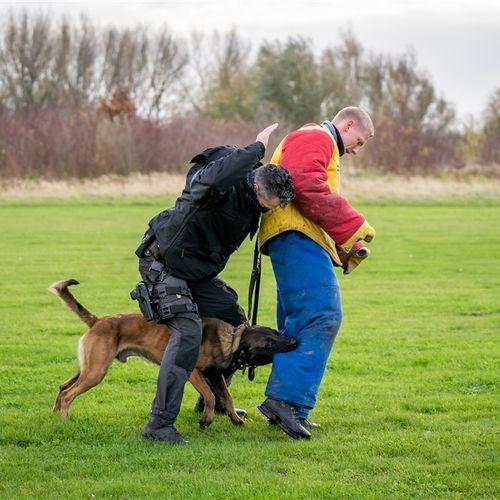 Afbeelding van Politie onderzoekt regels rond inzet politiehond na Zembla-uitzending