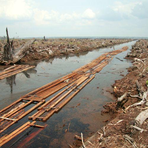 Afbeelding van Wageningse wetenschapper ontwikkelt alarmsysteem tegen ontbossing