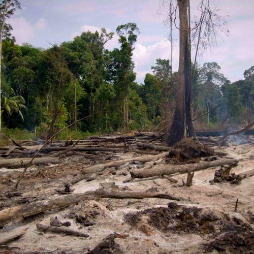 Afbeelding van 'Nederland in top 5 EU-landen gelinkt aan ontbossing'