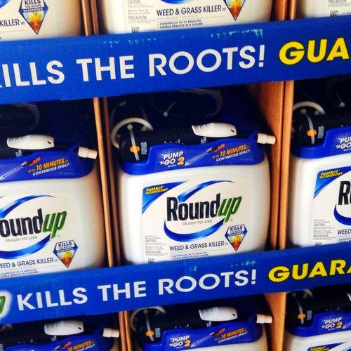 Afbeelding van 'Bayer wil voor tien miljard schikken met mensen die ziek werden van Roundup'