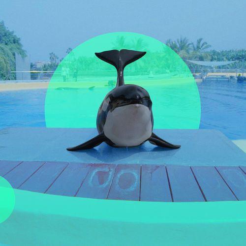 Afbeelding van Morgan, de verloren orka