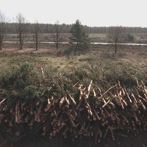 Afbeelding van Meer dan 200.000 Europeanen tekenen petitie tegen houtige biomassa