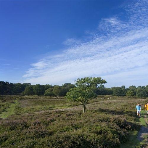 Afbeelding van Acht natuurgebieden in Drenthe vervuild met landbouwgif