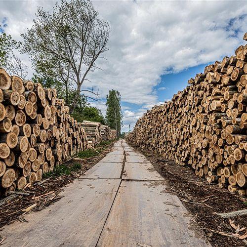 Afbeelding van Wildgroei aan kleine biomassacentrales door subsidie en minder strenge emissie-eisen