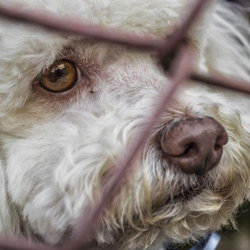 Afbeelding van 'Schouten vertraagt afhandeling wetsvoorstel dat dierenmishandeling tegengaat'