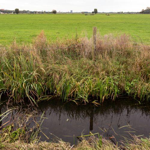 Afbeelding van 'Kwaliteit water in veel sloten en vijvers onvoldoende'