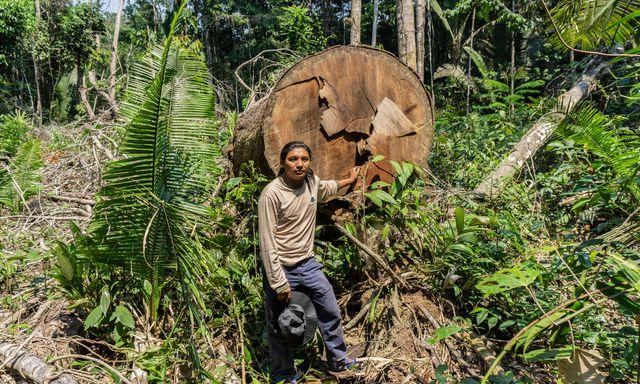 Afbeelding van Greenpeace: Nederland veroorzaakt nieuwe golf van ontbossing in Amazone