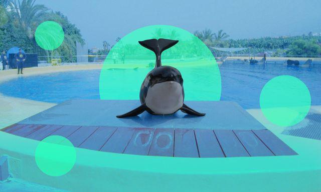 Afbeelding van Donderdag: Morgan, de verloren orka
