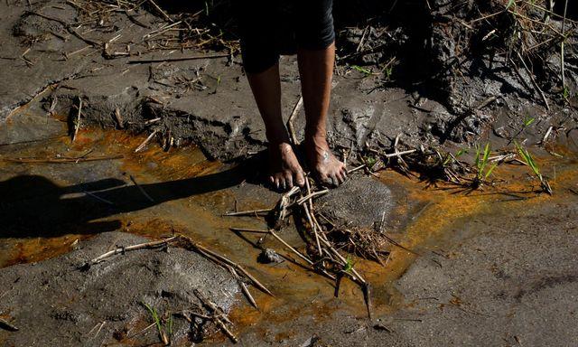Afbeelding van 'Europese banken beloven niet meer te investeren in omstreden Amazone-olie'